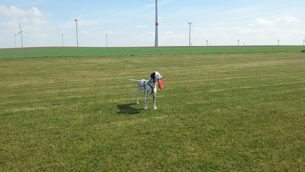 Dogfighter, 2 Stunden toben und kein Ende